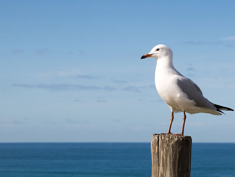 Gullsweep